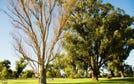 Lot 250, Indigo Bend, Wellard, WA 6170
