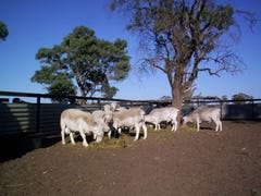 . Acme Downs, Bollon, Qld 4488