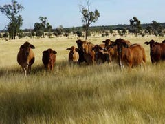 """Wilga Downs"", Emerald, Qld 4720"