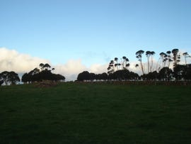. Grassy Road, Lymwood, King Island, Tas 7256