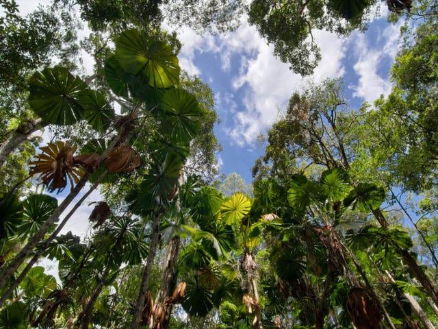 6 Fern Tree Place, Kuranda, Qld 4881