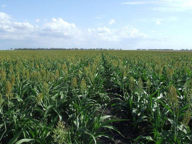 . Yarranlea Farming Country, Pittsworth, Qld 4356
