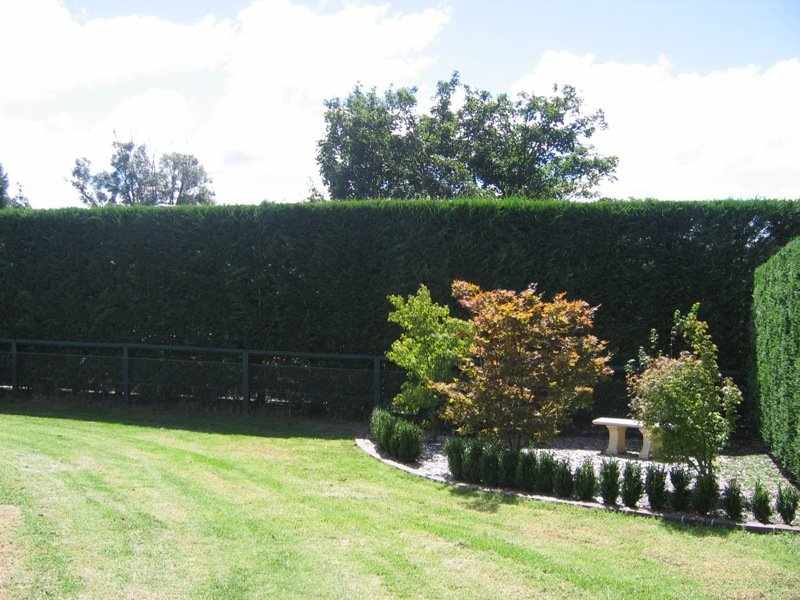 Modern Garden Design Using Grass With Retaining Wall Hedging Gardens Photo  252795