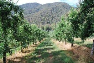 4 Growlers Creek Road, Wandiligong, Vic 3744