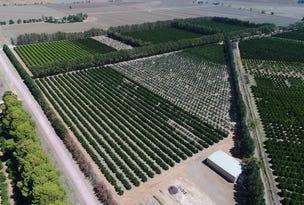 Farm 2026 Chant Road, Wamoon, NSW 2705