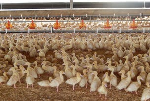Two Duck Farms, Two Duck Farms,, Nhill, Vic 3418