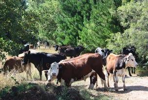 42 Bilsons Road, Irishtown, Tas 7330