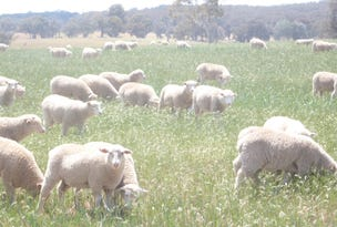 894 Little Plains Road, Boorowa, NSW 2586