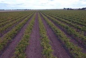Farm 1328 Wilga Road, Whitton, NSW 2705