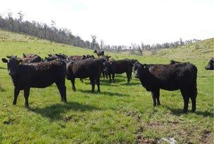 5060 Tasman Highway, Buckland, Tas 7190