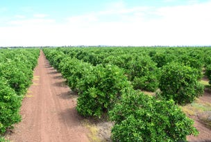 Farm 2678 Evans Road, Yoogali, NSW 2680