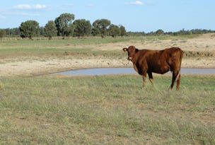 4500 acres GRAZING - CATTLE AND SHEEP, Tara, Qld 4421