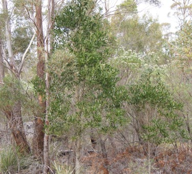 'Stockers' & 'Quoin', 740 Honeysuckle Road, Ross, Tas 7209