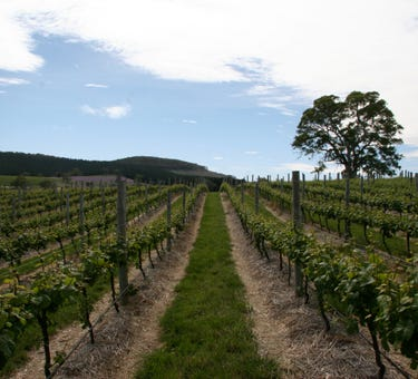 Domain Day Vineyard, Lot 349  Springton Road, Williamstown, SA 5351