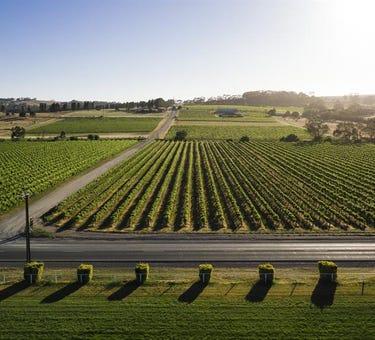 Flatview and White Hut Vineyards, Horrocks Highway, Stanley Flat, SA 5453