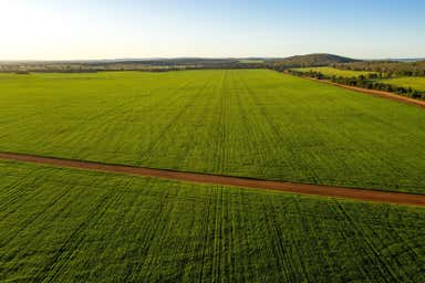 Myall Park Farm, 554 New Farms Road Nericon NSW 2680 - Image 2