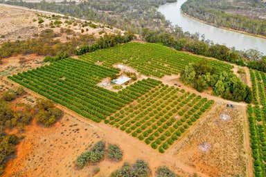 Swan Citrus 473 River Road Swan Reach SA 5354 - Image 4