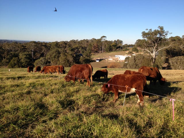 750 Grose Vale Road, Grose Vale, NSW 2753