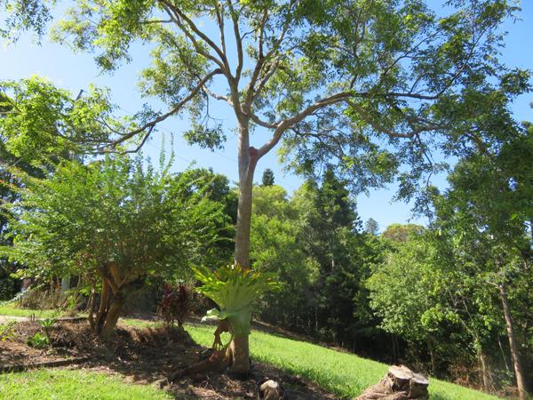 135 OLD BANGALOW ROAD, Byron Bay, NSW 2481