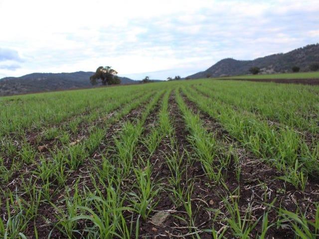 Surrey Farm, Werris Creek Road, Tamworth, NSW 2340