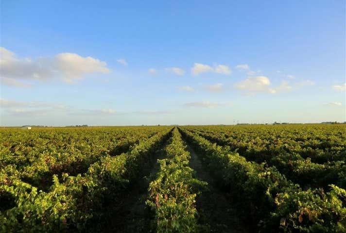 Coonawarra Premium Vineyards Project No. 1 & 2, McBain Road Coonawarra SA 5263 - Image 1