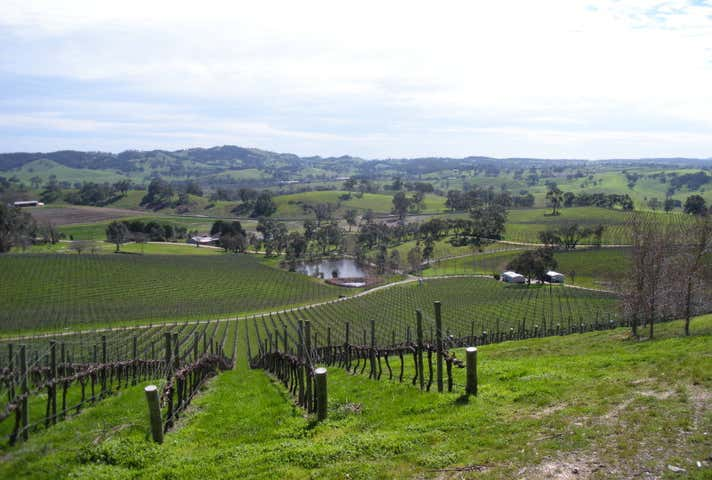Talc Hill Vineyard, Coleman  Road Gumeracha SA 5233 - Image 1