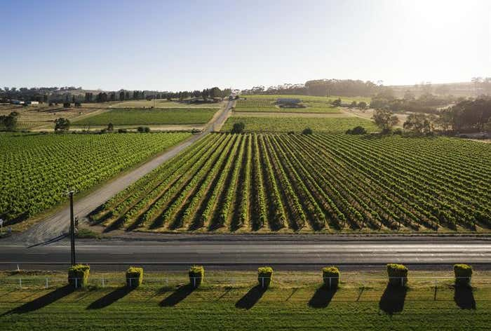 Flatview and White Hut Vineyards, Horrocks Highway Stanley Flat SA 5453 - Image 1