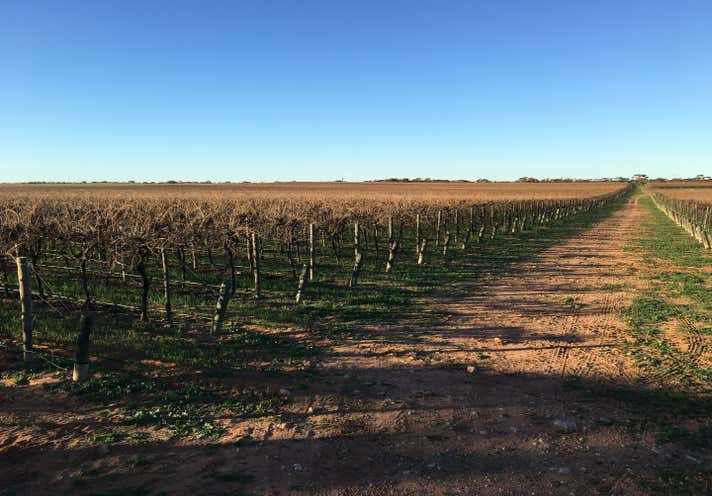 Glen Devlin Vineyards, 13922 Goyder Highway Devlins Pound SA 5330 - Image 2