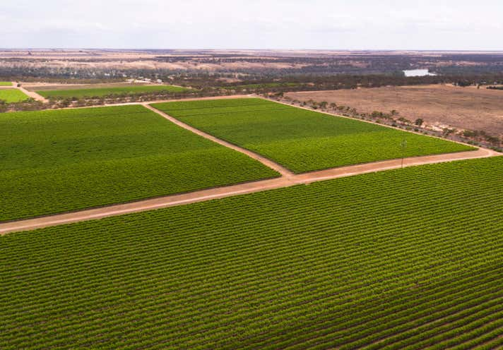 Glen Devlin Vineyards, 13922 Goyder Highway Devlins Pound SA 5330 - Image 1