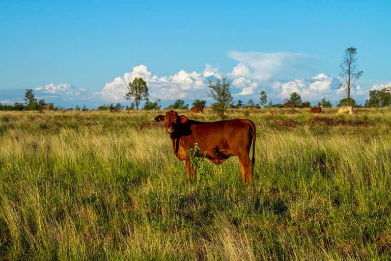 Nardu Glen Arden Road Roma QLD 4455 - Image 3