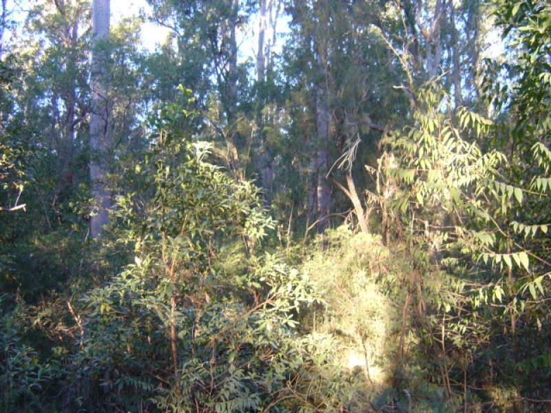 200 Glens Creek Road, Nymboida, NSW 2460
