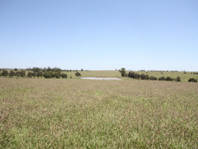11657 Fitzroy Development Road, Bauhinia, Qld 4718