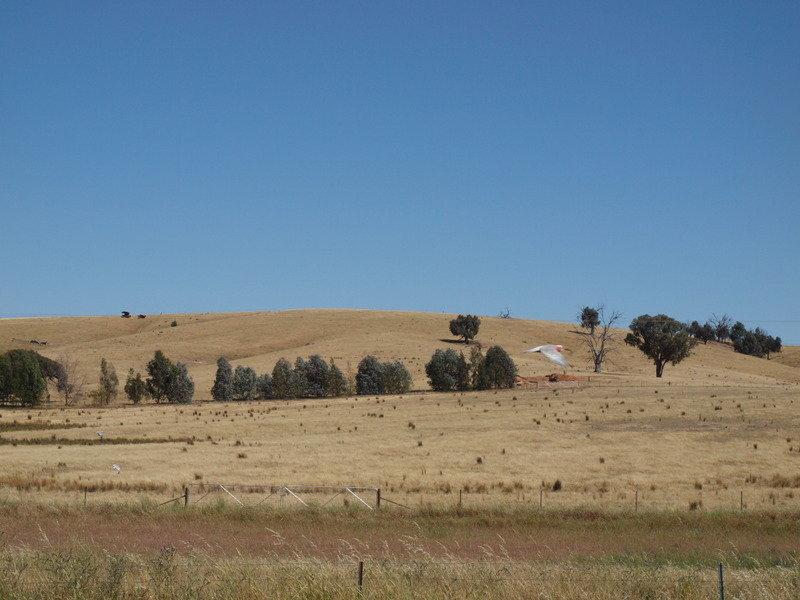 - 'Trevellin', Cookardinia, NSW 2650