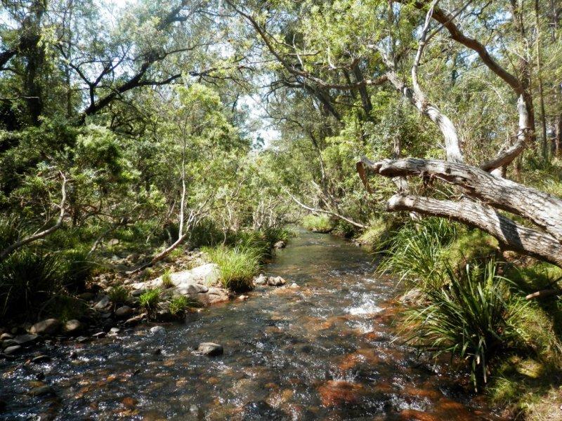 204 Hunters Road, Ewingar, NSW 2469