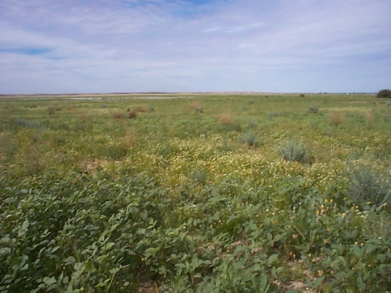Address available on request, Birdsville, Qld 4482
